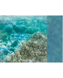 Barrier Reef P2661