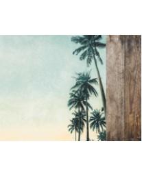 Palm Trees P2695